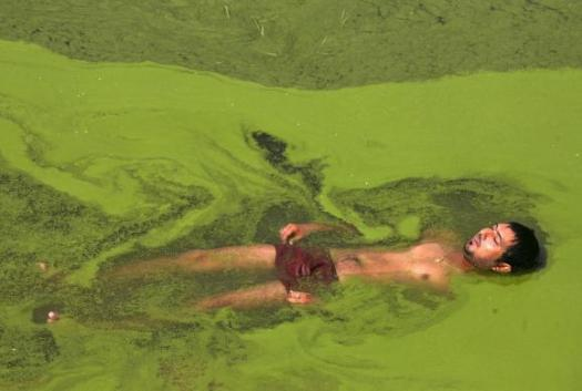 A man cools himself in a pond on a hot summer day on the outskirts of Jammu