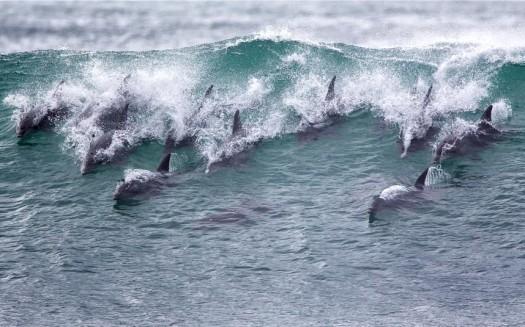 potd-dolphins_2991992k