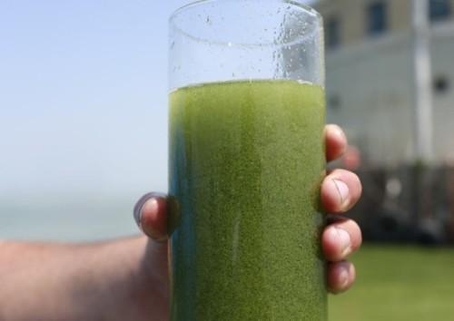 potd-algae_2995359k
