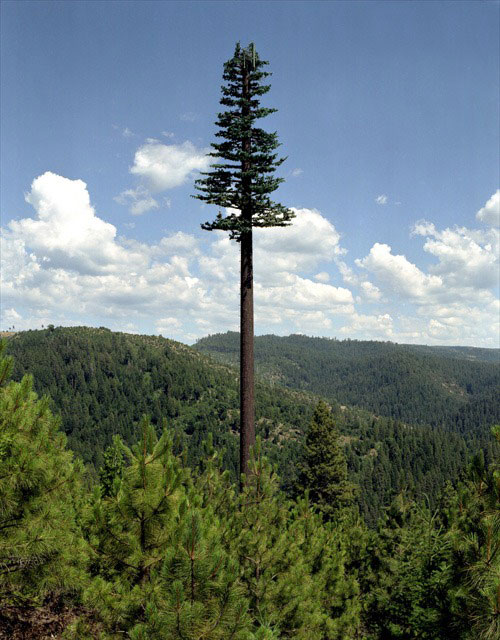 cell-phone-tower-disguised-as-a-tree-1